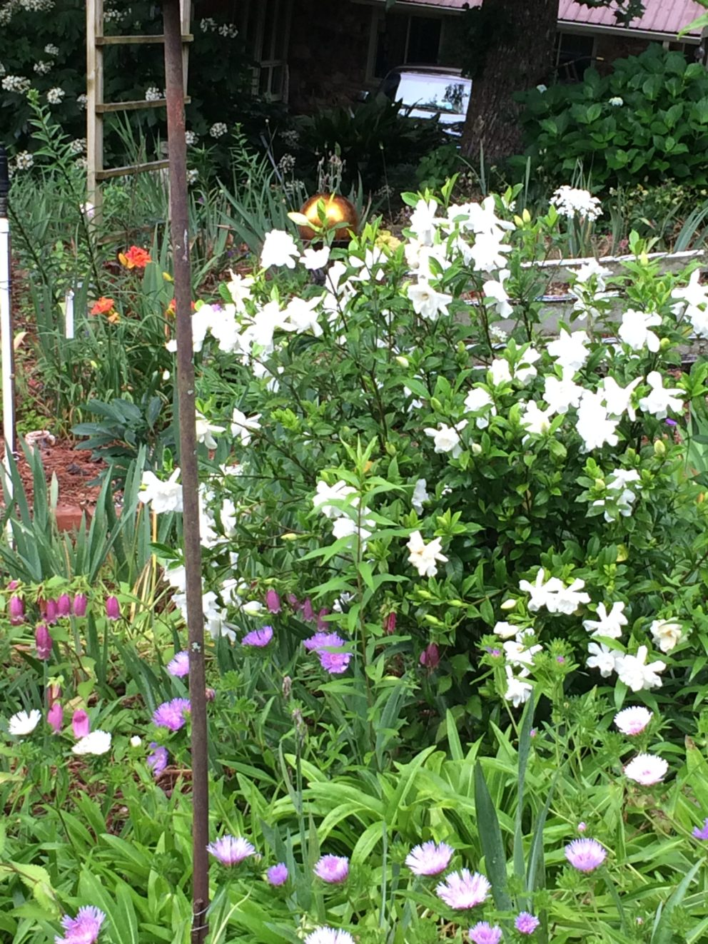 Companion plants at the Simonton Bridge Daylily Farm