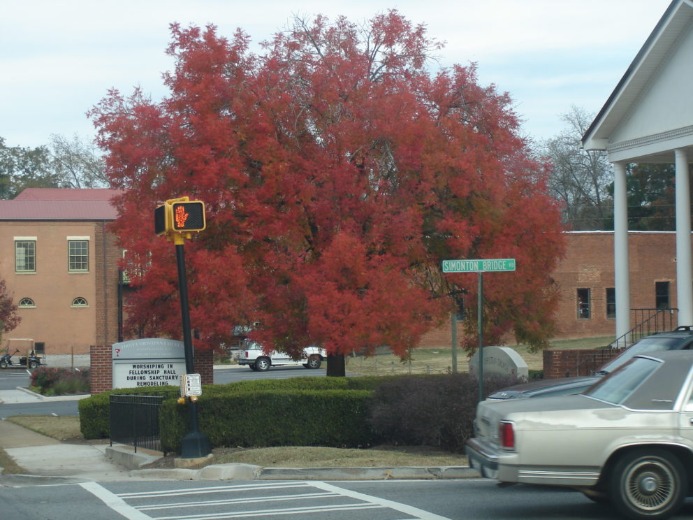 Fall foliage in Watkinsville